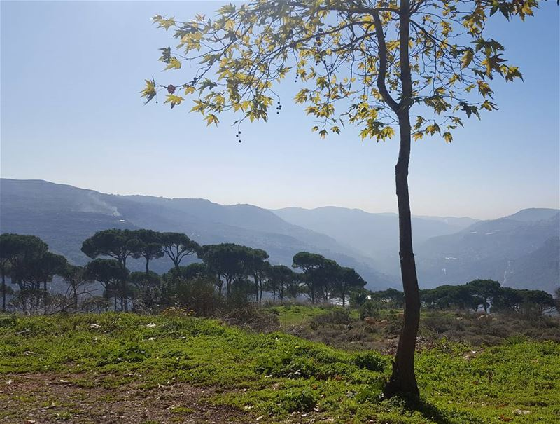 nature naturephotography natureaddict bluesky lebanon treescape ... (Ras ej Jabal)