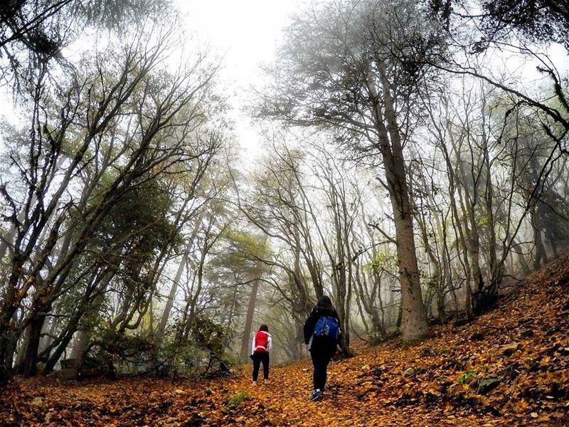 hikingmates girlswhohike Hiking Forest Ehden HorshEhden Lebanon... (Horsh Ehden)