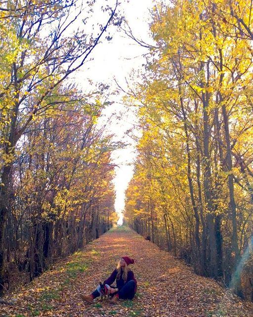 The beauty of the fallen 🍃🍂🍁• autumn vibes visitlebanon lebanon ... (`Ammiq, Béqaa, Lebanon)