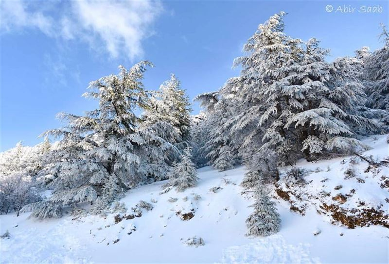 Hey Snow ❄️ Welcome to Lebanon 😍 we've been waiting for you ❄️⛄️❄️... (Al Shouf Cedar Nature Reserve)