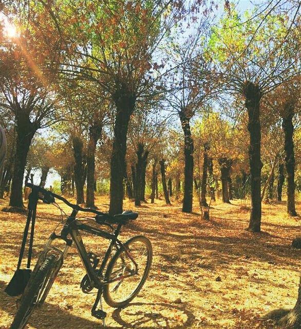 Does the walker choose the path, or the path the walker?.. taanayel ... (Deïr Taanâyel, Béqaa, Lebanon)