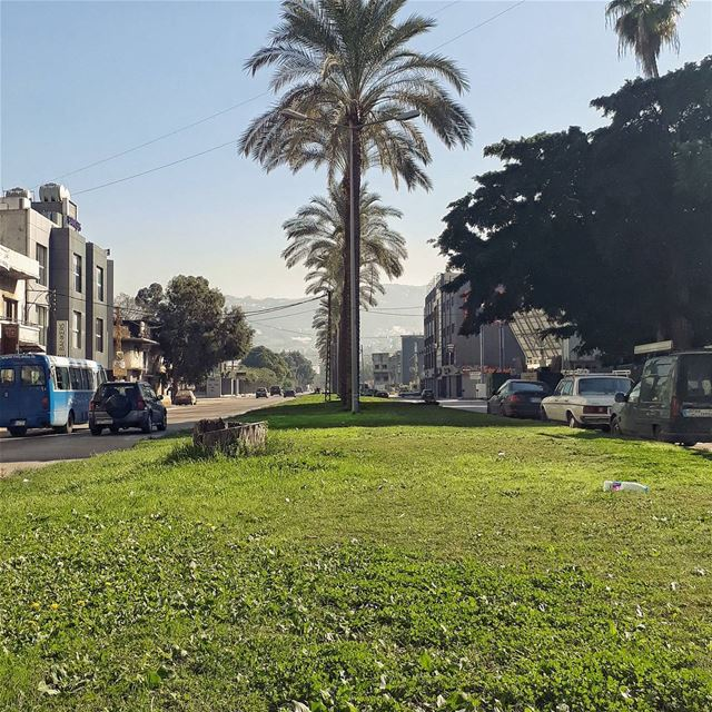 🇱🇧 @ugly.beirut uglycity urban beirut lebanon searoad tree ...