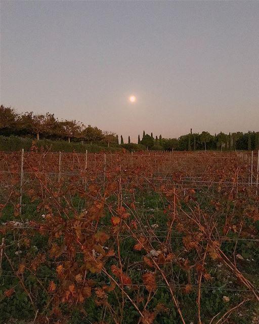 winery ixir ixirwinery supermoon moon sunset livelovelebanon ... (Ixir Winery)