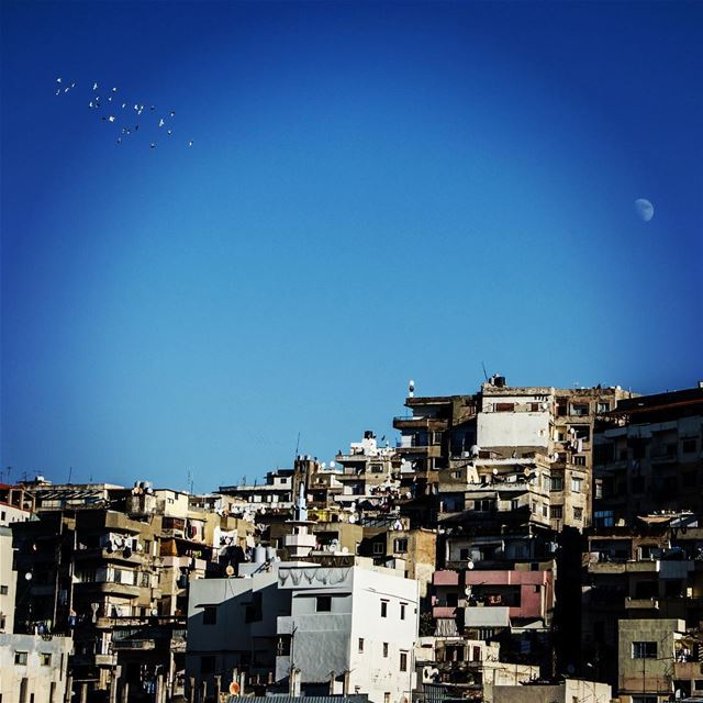 The constellation of birds.. I was thinking over there if they ever... (Tripoli, Lebanon)