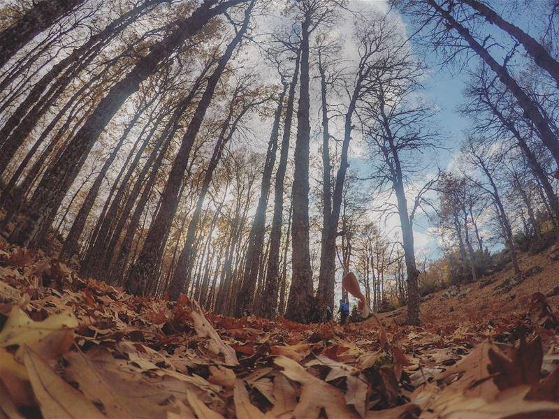 fall 🍂🍁............ Lebanon livlovelebanon lb_akkar ... (`Akkar, Liban-Nord, Lebanon)