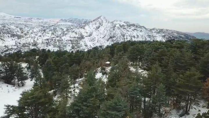 myLebanon ❤... cedars tannourine winter snow landscapephotography...