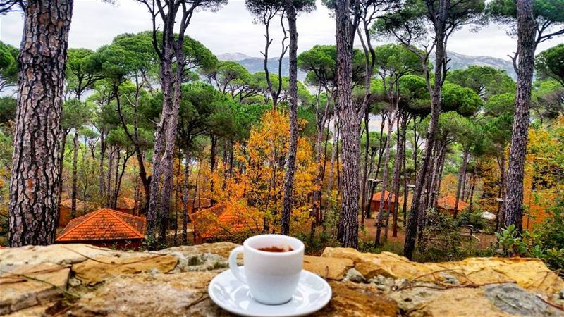 When coffee meets nature coffee coffeetime coffees coffeelover coffee... (Bkâssîne, Al Janub, Lebanon)