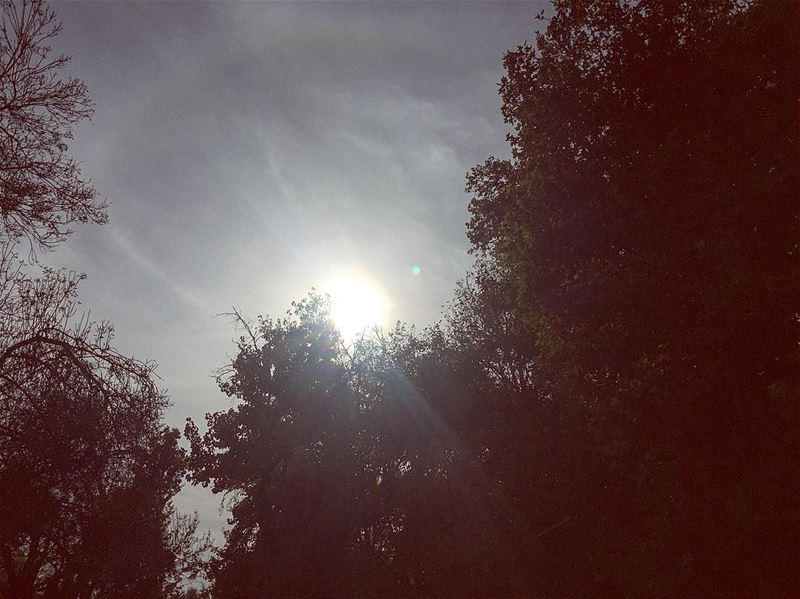 If it doesn't challenge you it wont change you--- trees sun ...
