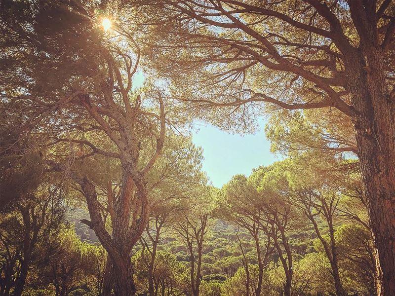 Autumn 🍂 shows us how beautiful it is to Let Go....✨@livelove_jezzine @li (Bkâssîne, Al Janub, Lebanon)