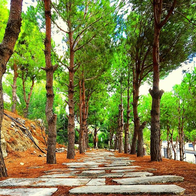 Do not go where the path may lead, go instead where there is no path and... (Maghdoûché, Liban-Sud, Lebanon)