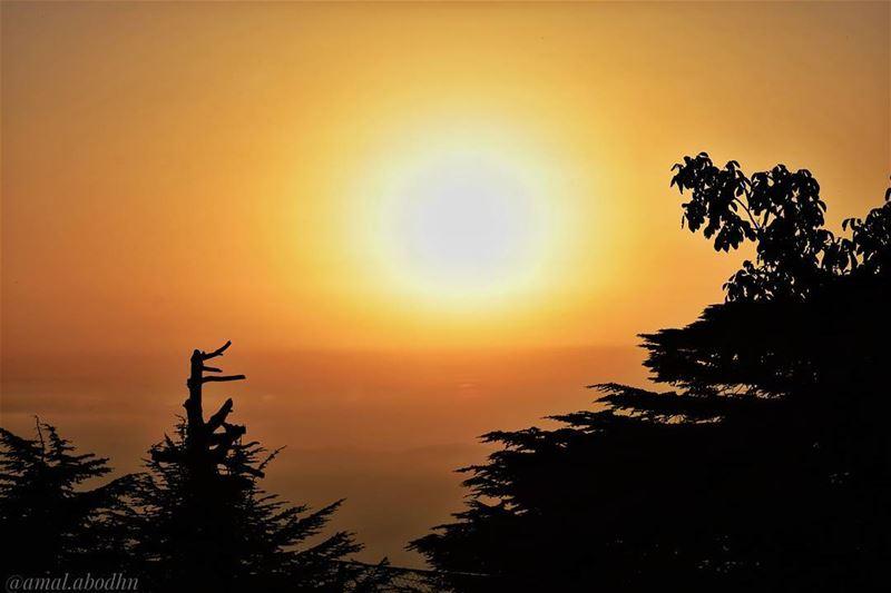 اذا لم يجد الإنسان شيئا يموت من اجله،، فإنه لن يجد شيئا يعيش من أجله 👌... (Maaser El Shouf Cedar Reserve محمية ارز معاصر الشوف)