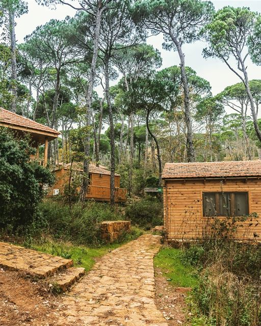 Location : Bkassine, Lebanon earthpix earthofficial exploretocreate ... (La Maison de la Forêt)