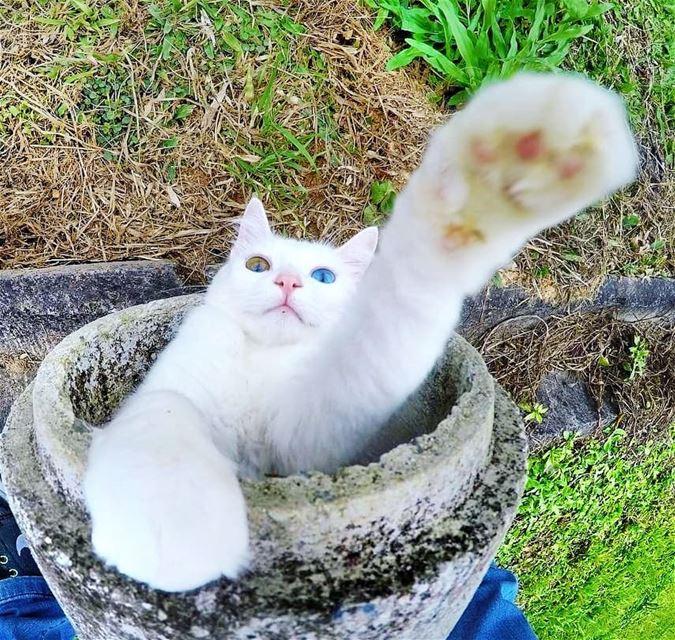 عن جمال العيون 😍❤ cat tyr lebanon ... (Tyre, Lebanon)