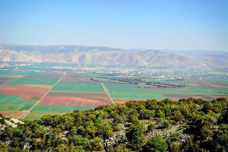 Colors of life ! naturephotography greenery natureza igers mylens ... (West Bekaa)