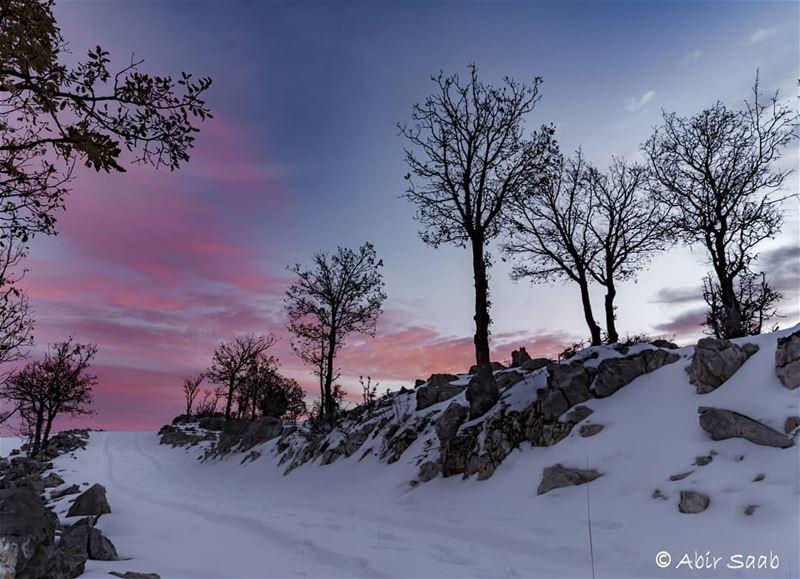 My favorite color is SUNRISE Lebanon tannourine sunrise trees snow ... (Tannurin Al Fawqa, Liban-Nord, Lebanon)
