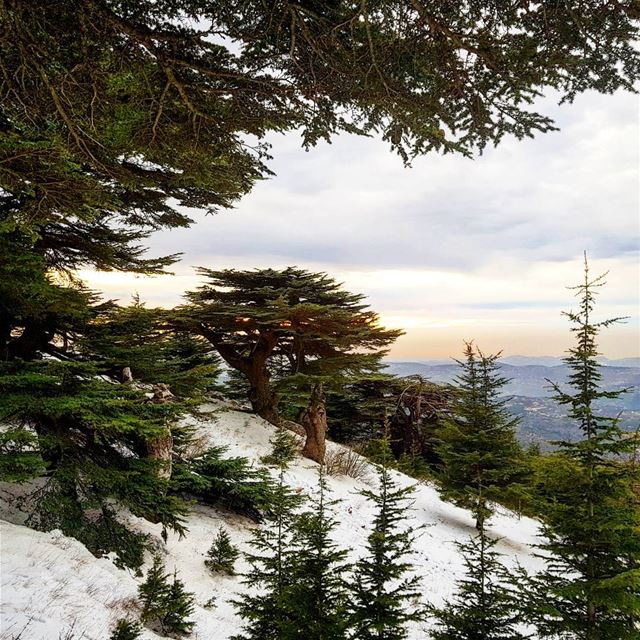 Meraviglioso sunset. lebanon  chouf  reserve  discover  middleeast  hike ... (Al Shouf Cedar Nature Reserve)