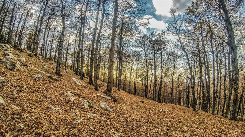 autumn mood 🍁🍂............ Lebanon livlovelebanon ... (`Akkar, Liban-Nord, Lebanon)