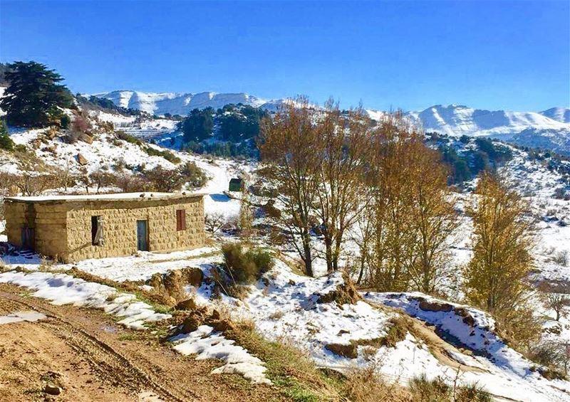 في_بلادي فقط في لبنان يلتقي الخريف و الشتاء ليزداد الجمال جمالاً فوق جبال... (Arz el Kfoûr)