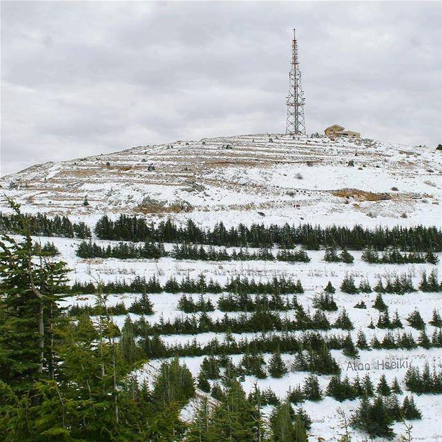 ❄️Hello December❄️ lebanon winter snow christmas frozen freezing ... (Maaser El Shouf Cedar Reserve محمية ارز معاصر الشوف)