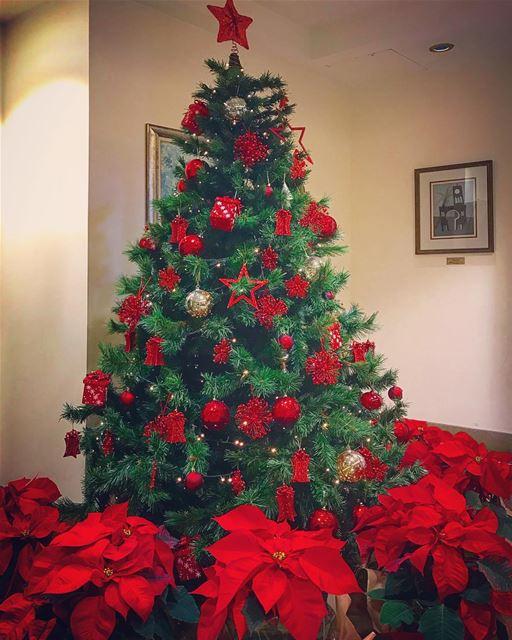 Christmas vibes everywhere🎄💫🌹✨@aub_lebanon @aub_alumni @livelove.aub @a (American University of Beirut (AUB))