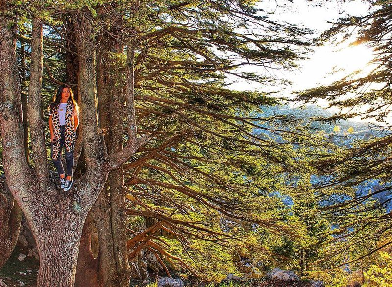 When the roots are deep, there is no reason to fear the wind 🌲🇱🇧✌🏼Long (Cedars of God)
