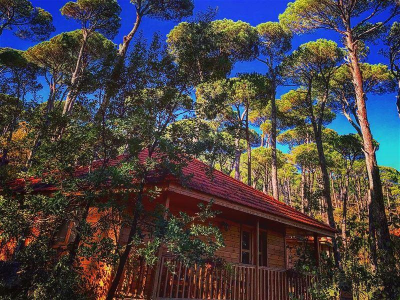 The ✨ Human Spirit✨ needs places were nature has not been rearranged by... (La Maison de la Forêt)