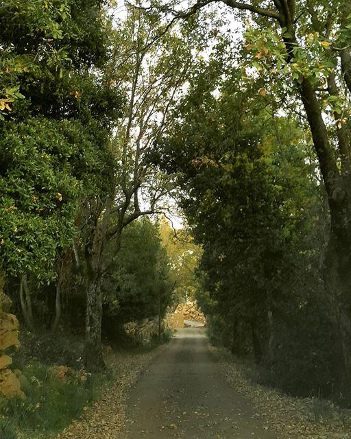 road nature fall ghbele kesserwen ...