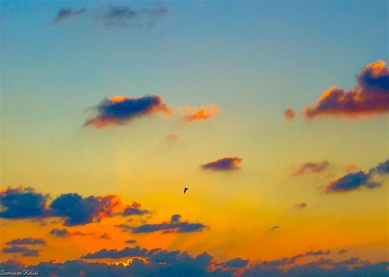 sunset freedom flying bird clouds colors ...