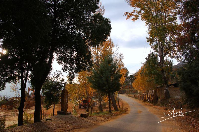 akoura lebanon tree trees fall spring summer winter nature ...