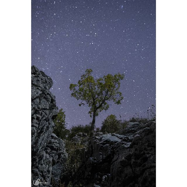 A favourite photo of mine solotree nightphotography nighttime ...