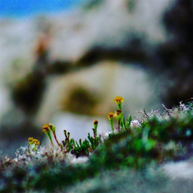 so small. wildlifephotography wildlifephotography birdphotography ...
