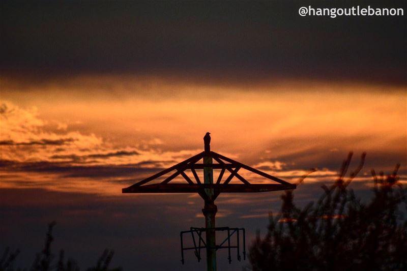 Even birds enjoy sunsets- hangoutlebanon lebanonpocketguide ... (Tyre, Lebanon)