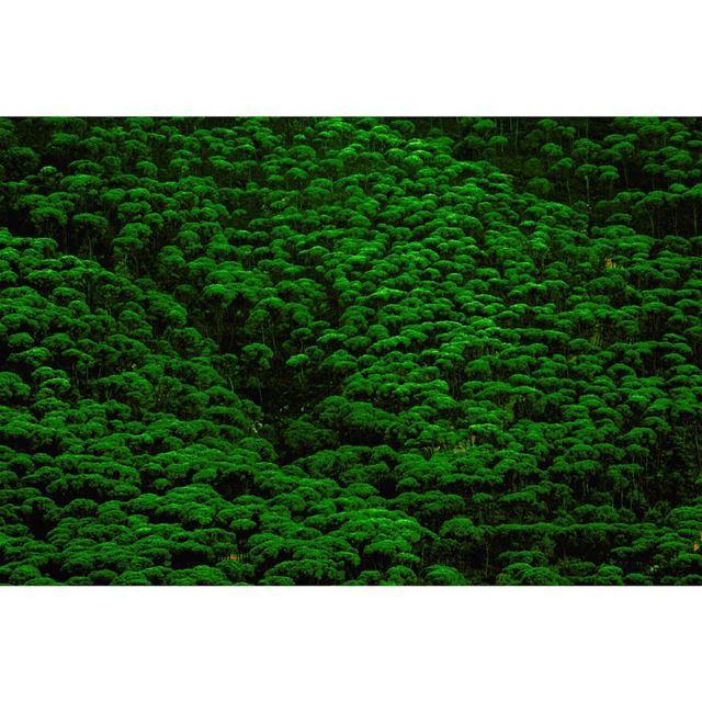 صنوبر جزين © Milad lamaa | pine trees | texture | 2017 pine trees ...