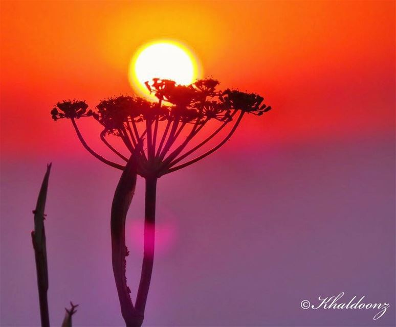 Stay till the sun sets ~~~~~~~~~~~~~~~~ nikontop_  nikonworld  bns_sky ... (Baakline, Mont-Liban, Lebanon)