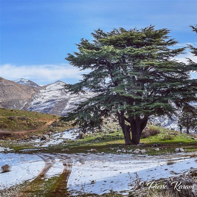 road to beauty morning hike lebanese mountains winter trees ...