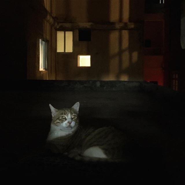 Momo, guardian of the night  cat  pet  streetphotography  catsofinstagram ... (Tyre, Lebanon)