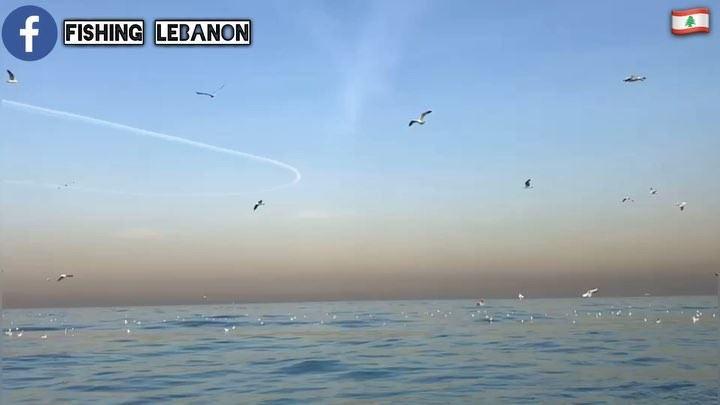 @fouadmitani (Birds of Lebanon and the Middle East) @fishinglebanon - @inst (Beirut, Lebanon)