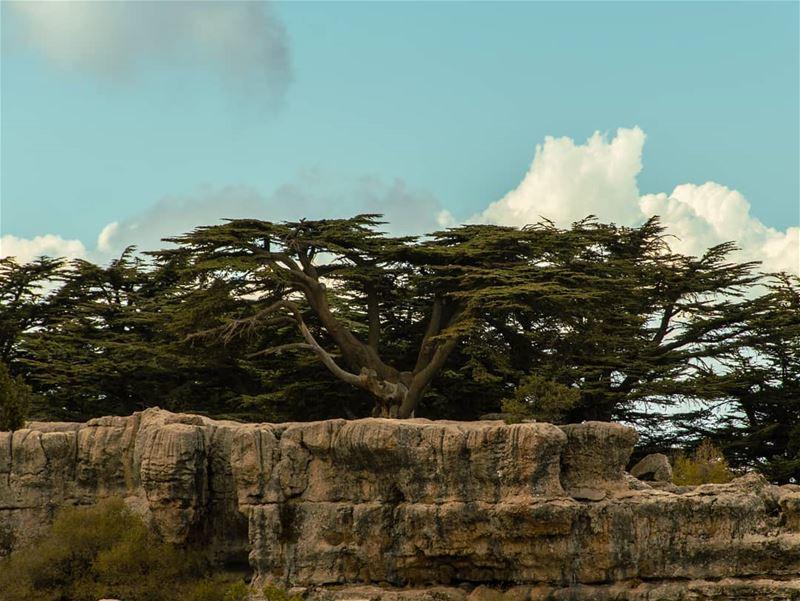 🌲فوق الغَيمْ مْعَلّايي🌲..... nature naturephotography forest... (Arz Tannoûrîne)