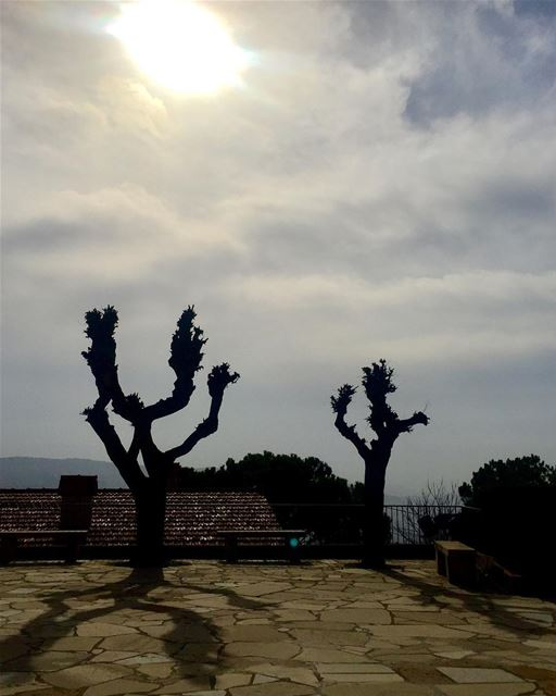 Barren Trees and their casted Noon shadow on December 21... shadows ... (Rayfun, Mont-Liban, Lebanon)