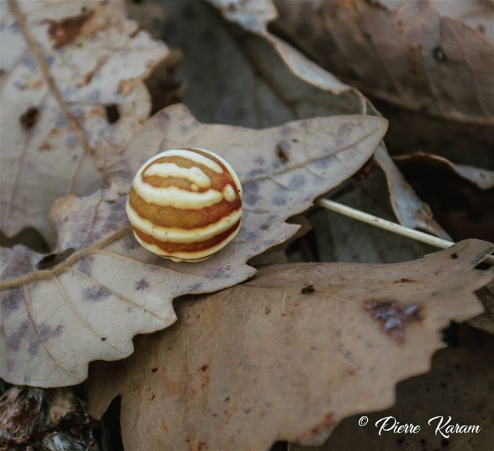 Leaf reaction to parasite 😊...... beautifull leaf morning hike...