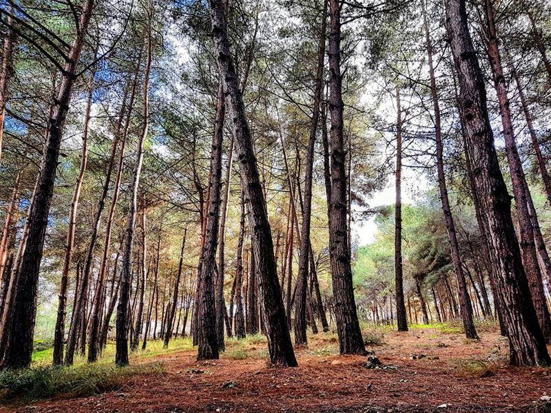 Evergreen winter lebanese landscape tibnine lebanon livelovebeirut ... (Tibnin)