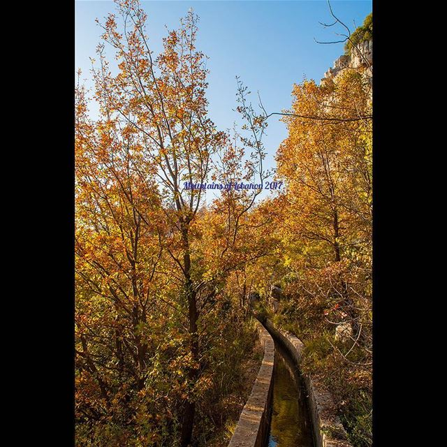 The golden leaves still hanging on (Dec 21) on this water canal somewhere... (Feitroun, Mont-Liban, Lebanon)