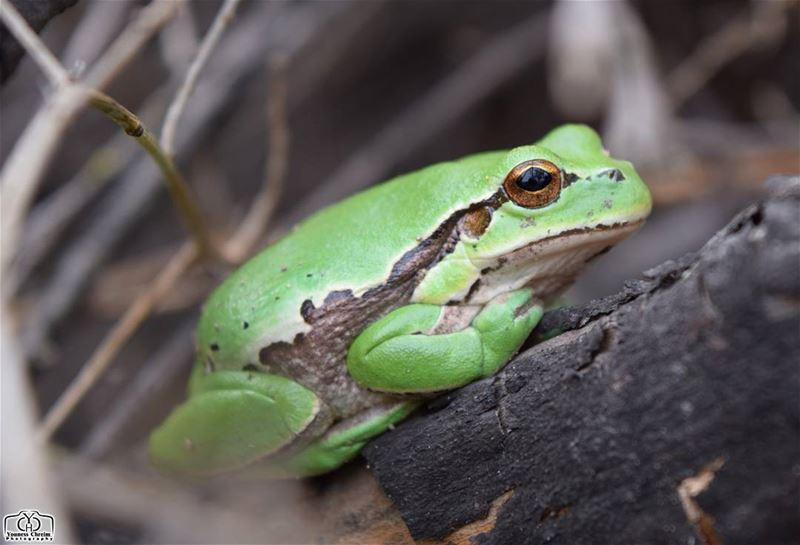 Good morning nature 🐸✋ frog winter nature animals insects ...
