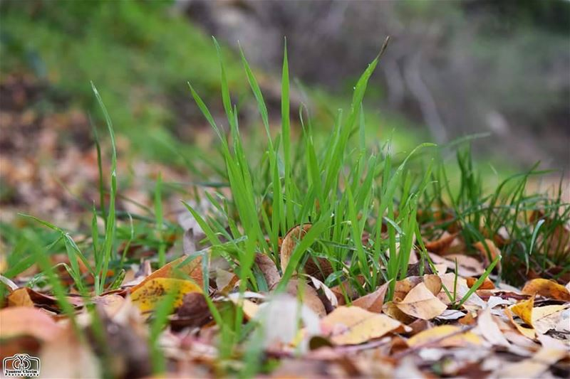 نهاية حياة ... و بداية أخرى ... autumn leaves leaf grass winter ...