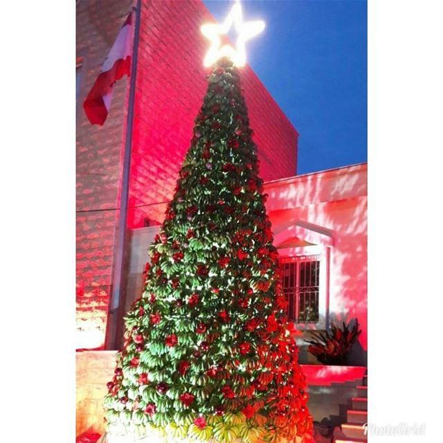 O Christmas Tree🎄🎄🎄 damour lebanon ig_lebanon livelovelebanon ...