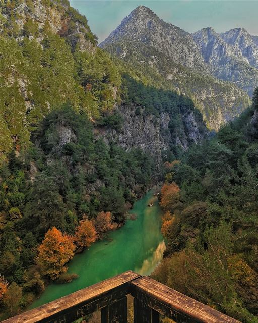 Colors of Chouwen nature  lebanon  mountains  forest ... (Chouwen)