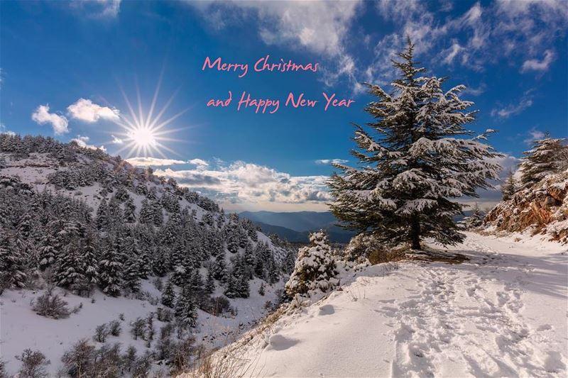 merrychristmas happynewyear lebanon winter snow cedar trees sun ...