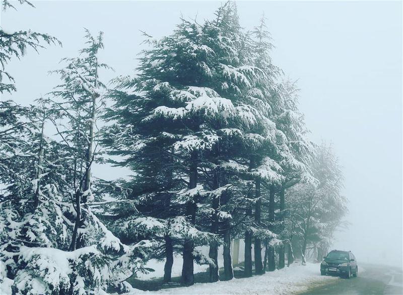 Amazing feeling... ❄❄❄ AlArz Cedars Bsharri Lebanon Lebanese ... (Bsharri, Lebanon)