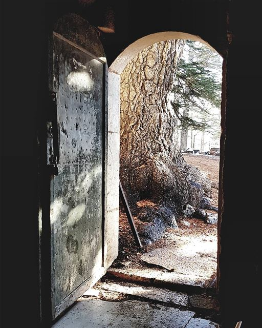 Why do you stay in prison, when the door is so wide open? - Rumi... (Bsharri, Cedars)
