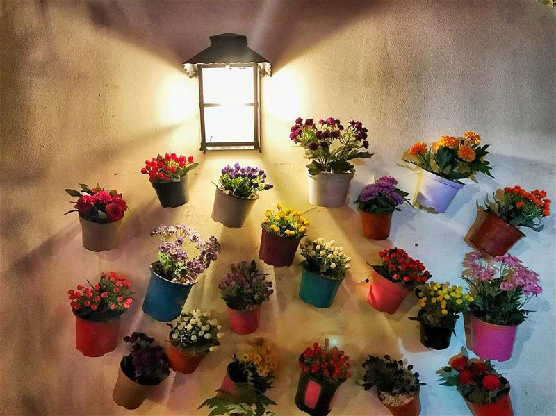 night light flowers wall streetstyle blossom photooftheday ...